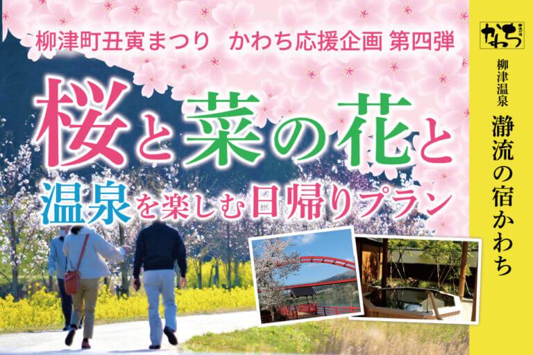 桜と菜の花と温泉を楽しむ日帰りプラン