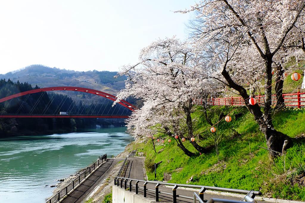 桜の開花情報【2021.4.12】