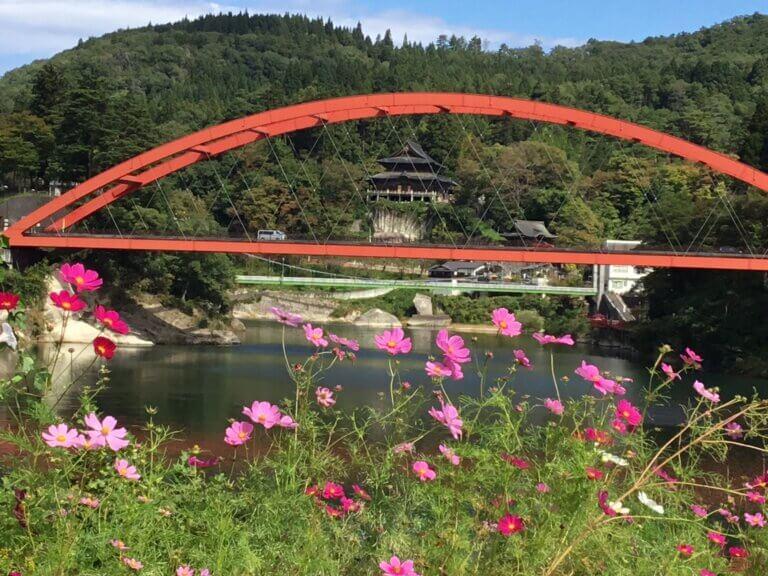 コスモス揺れる秋の柳津へ、県民割でお越しください